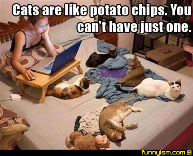 c387835f4 Cats are like potato chips   Funny Pics   Funnyism Funny Pictures