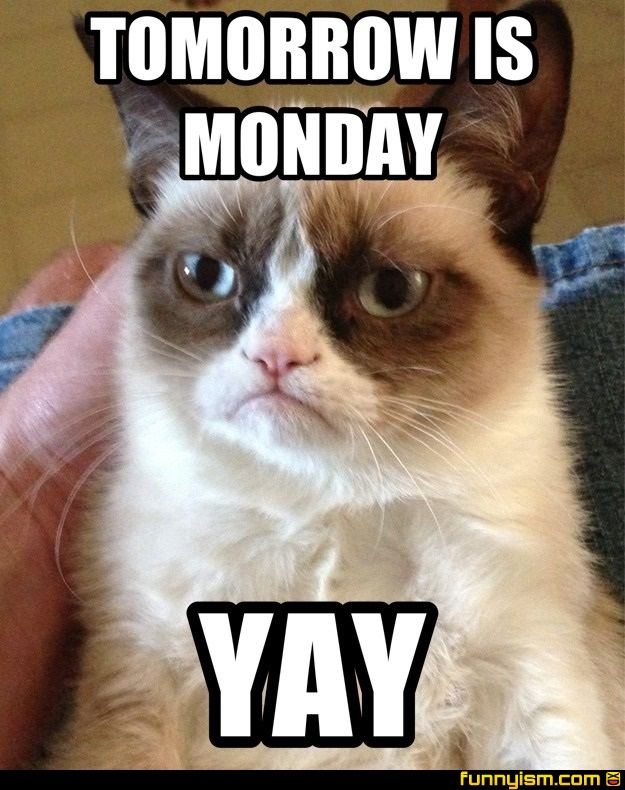 Tomorrow Is Monday Yay Meme Factory Funnyism Funny Pictures Please don't take these memes seriously they are meant to be funny (which they kinda are). funnyism