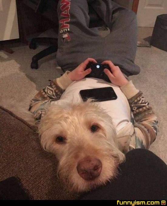 he s a good gamer dog brant funny pics funnyism funny pictures