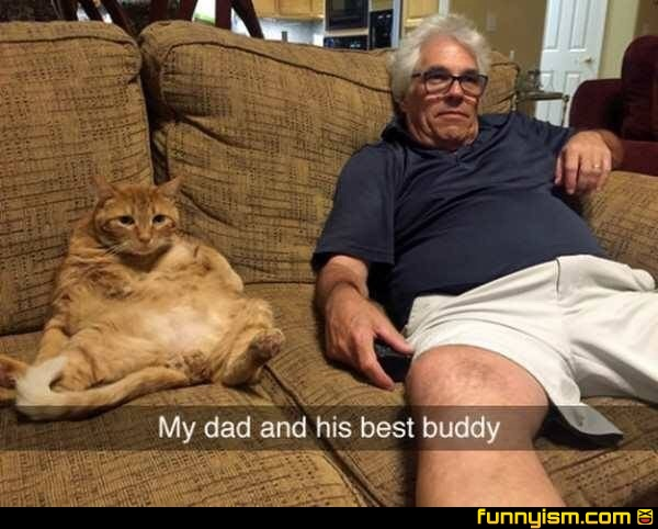 Real Life Garfield And Jon Funny Pics Funnyism Funny Pictures